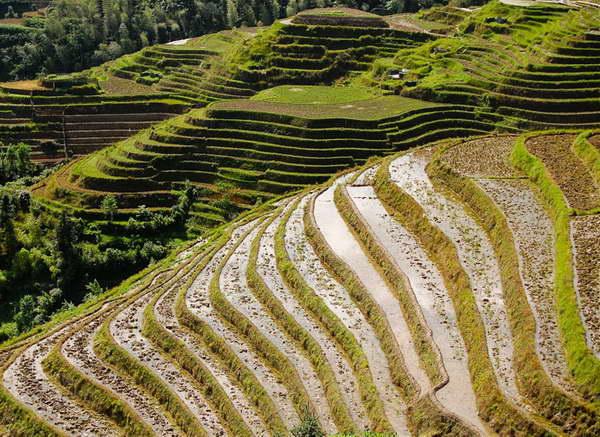 Longsheng dragonback rice terraces tours by Yangshuo Village Inn